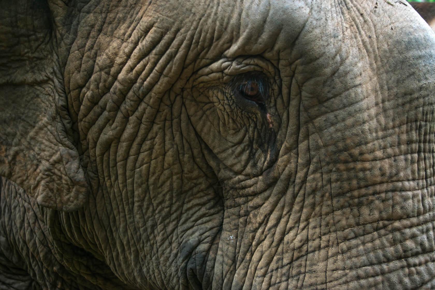 Chiang Mai elephant tour ethical thailand