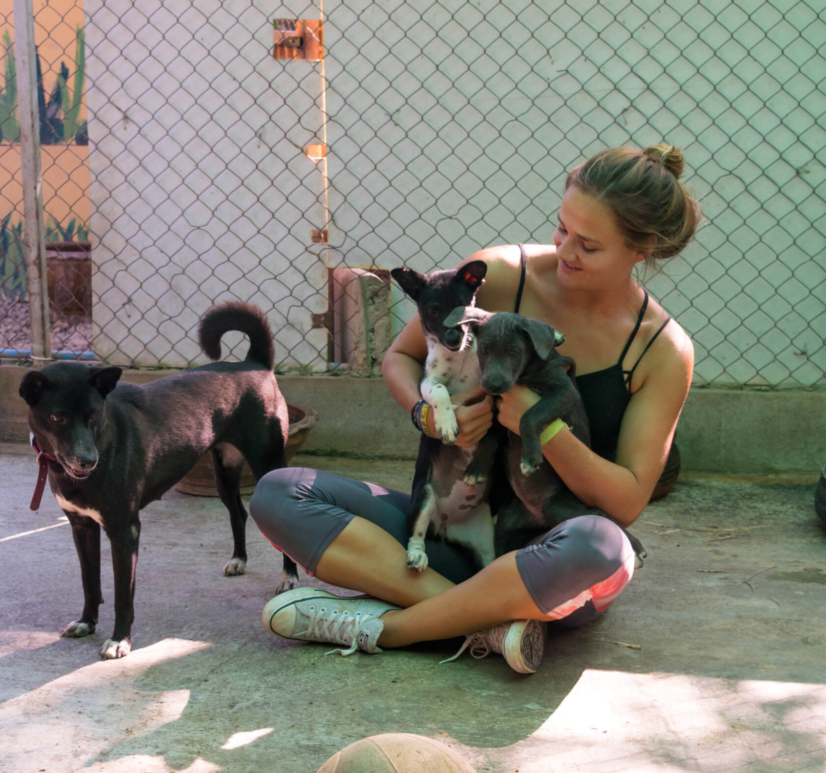 playing with puppies at care for dogs chang mai thailand