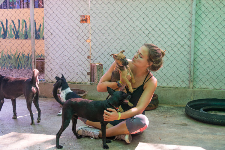 Volunteering at Care for Dogs Chiang Mai Thailand volunteering with puppies