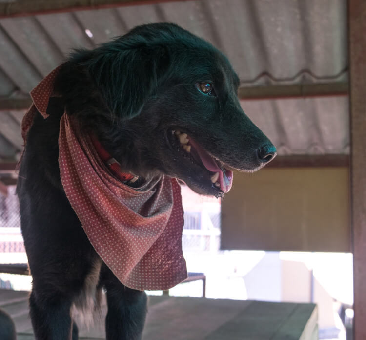 Volunteering at Care for Dogs Chiang Mai Thailand
