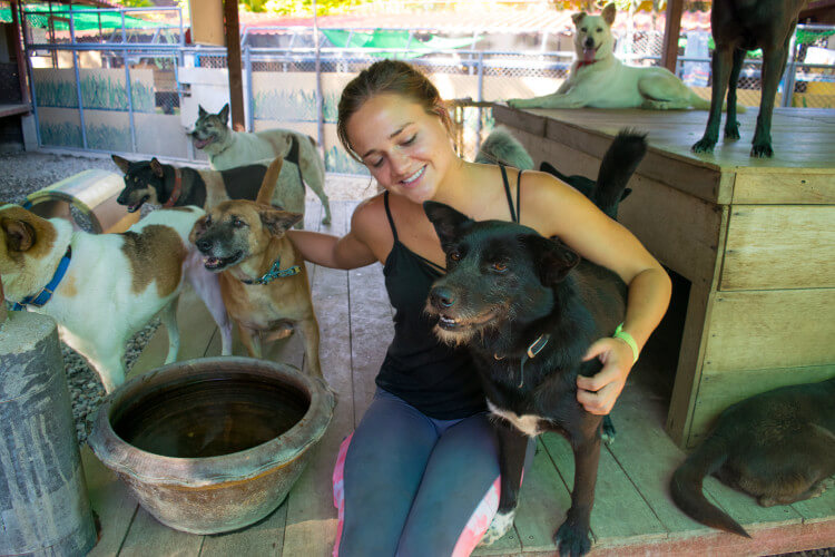 Volunteering at Care for Dogs Chiang Mai Thailand dog shelter volunteer southeast asia