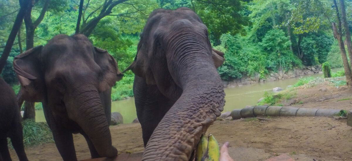 Elephants, Trekking, and Rafting Adventure in Chiang Mai (VIDEO!)