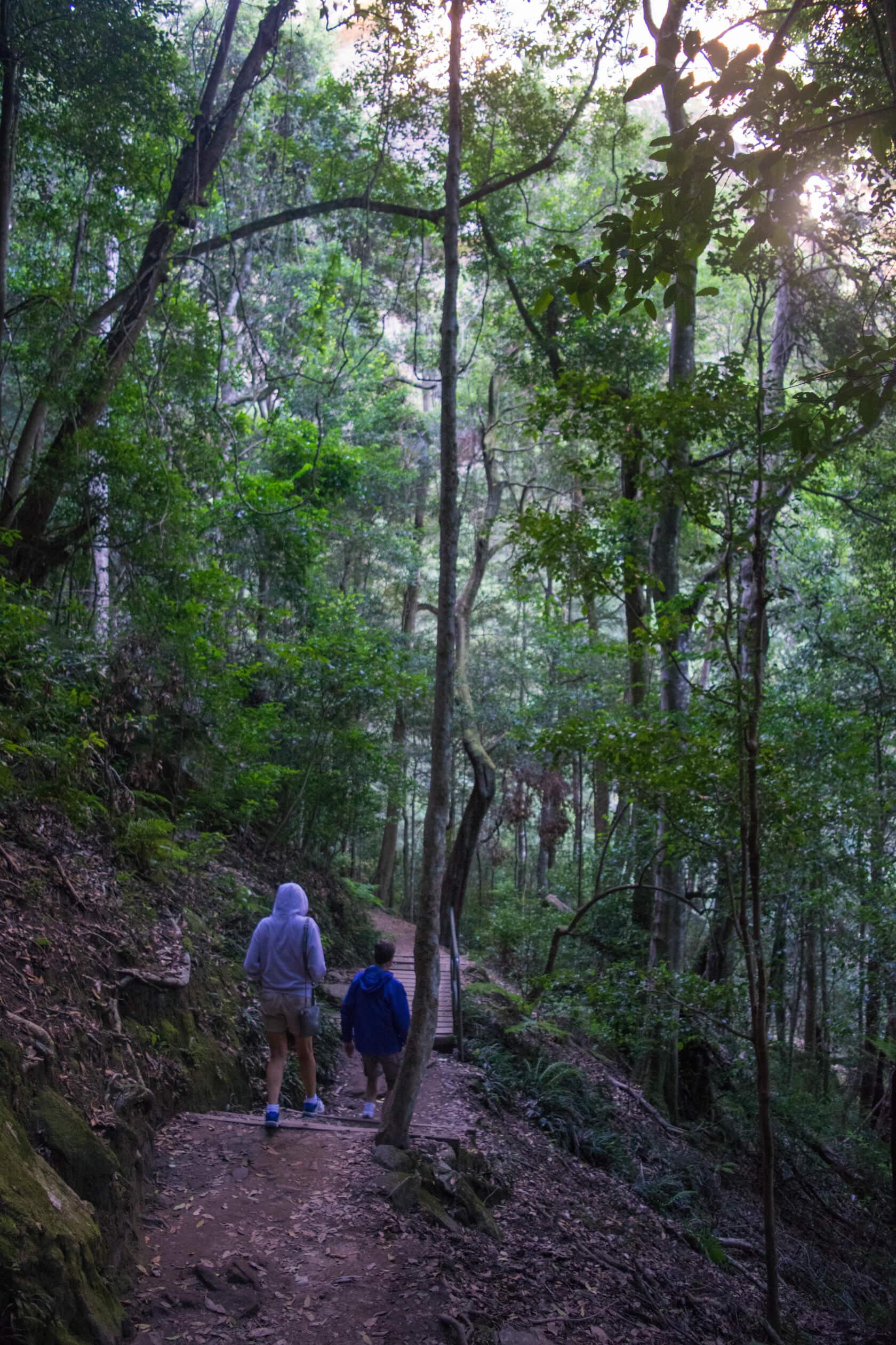 Blue Mountains Trail Bush Walk