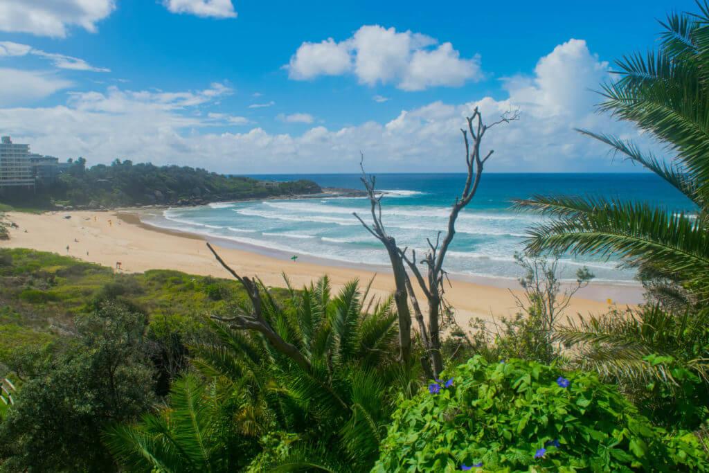 manly to dee why walk freshwater beach sydney coastal walks