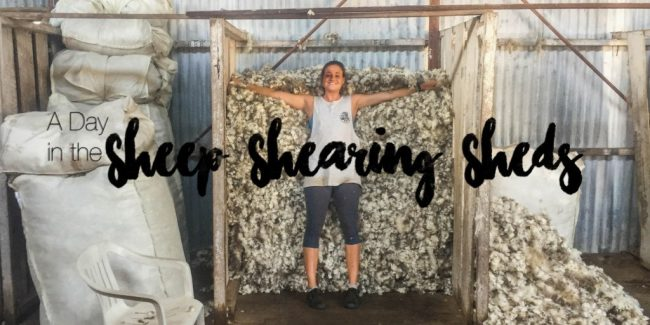Australian Country Stories: A Day in the Sheep Shearing Sheds