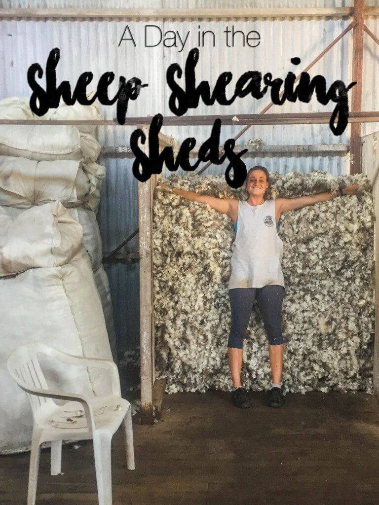 My experience with a full day in the sheep shearing sheds - this profession is so impressive, tough, and eye-opening!