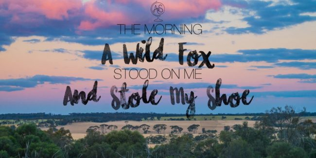 Australian Bush Stories: The Morning a Wild Fox Stood on Me and Stole My Shoe