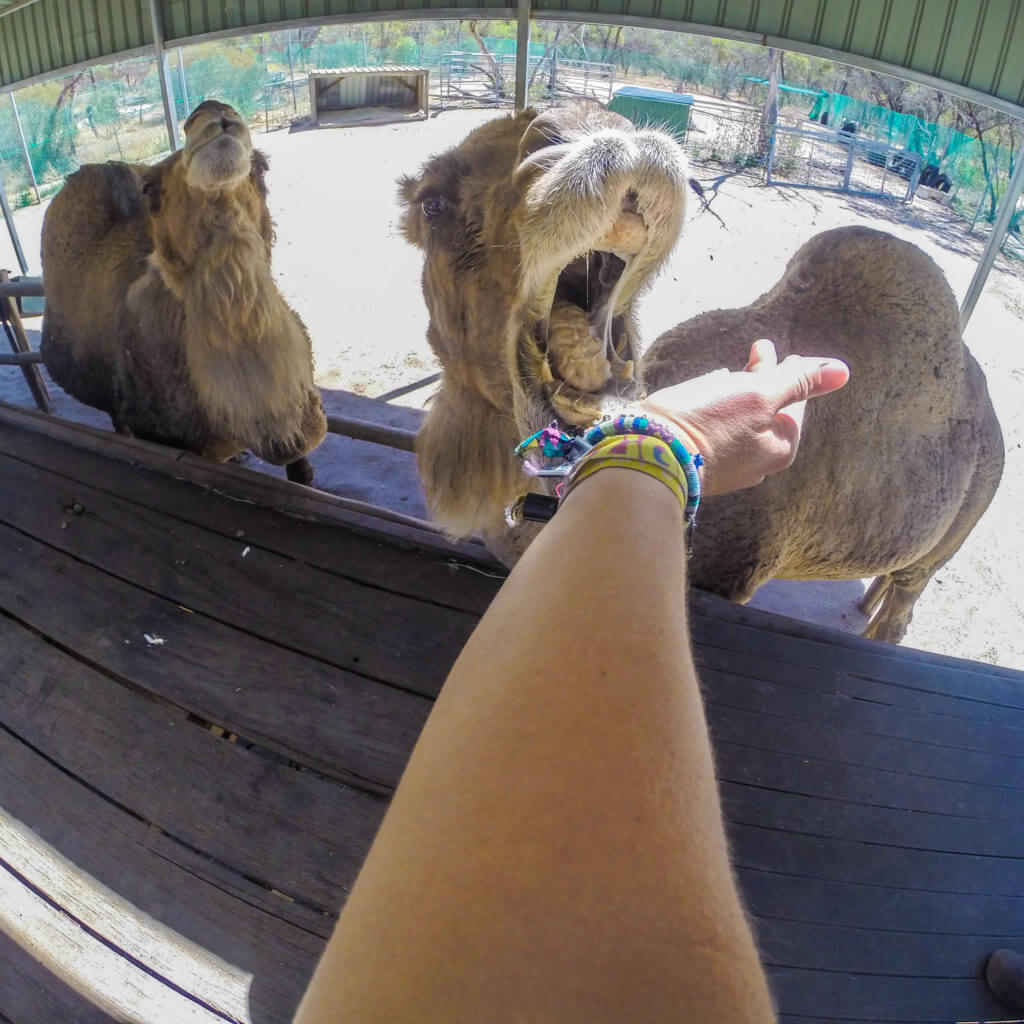 wave rock wildlife park