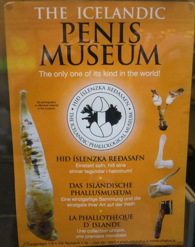iceland phallogical museum penis museum in iceland
