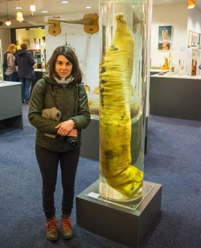 penis museum iceland sperm whale phallus