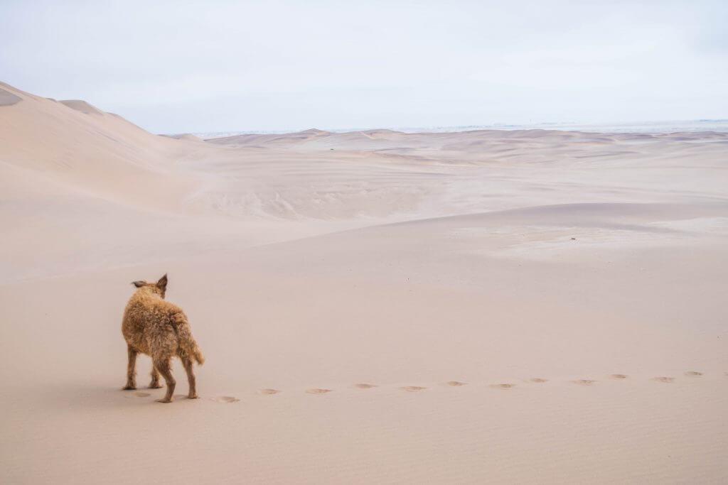 sandboarding in namibia sand dune climb
