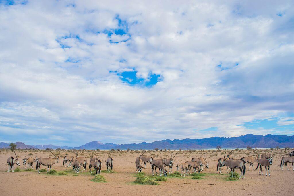 namibian road trip sossus desert wild oryx