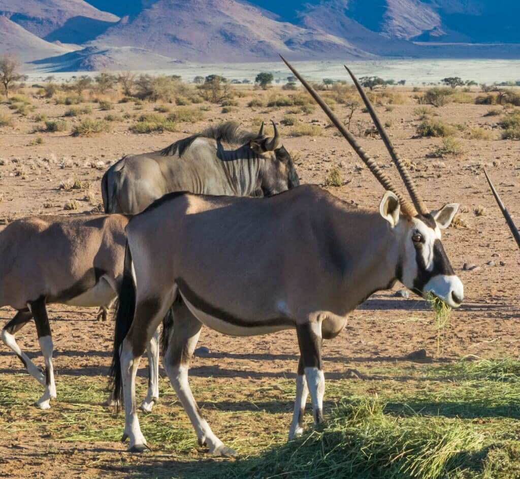 namibian road trip sossus desert oryx