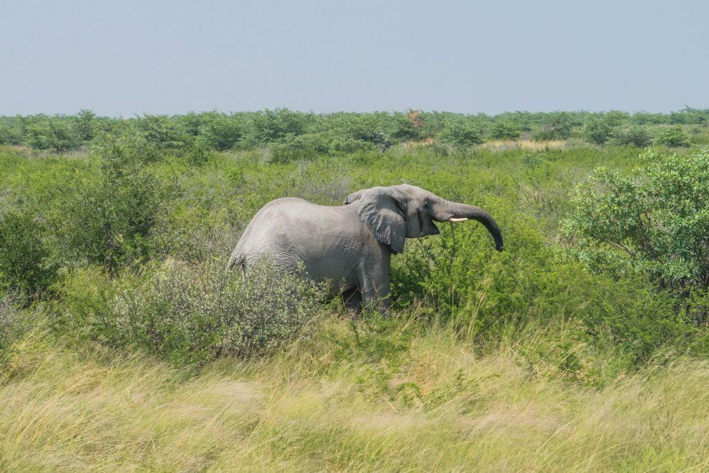 elephant sands botswana