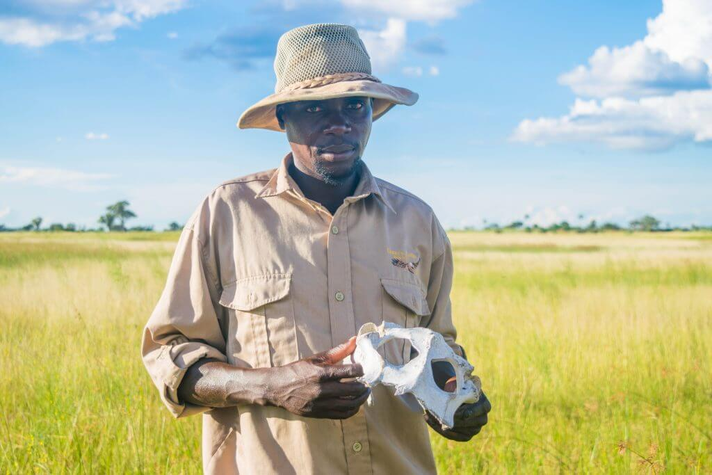 okavango delta ssafari game walk tour guide animal skull