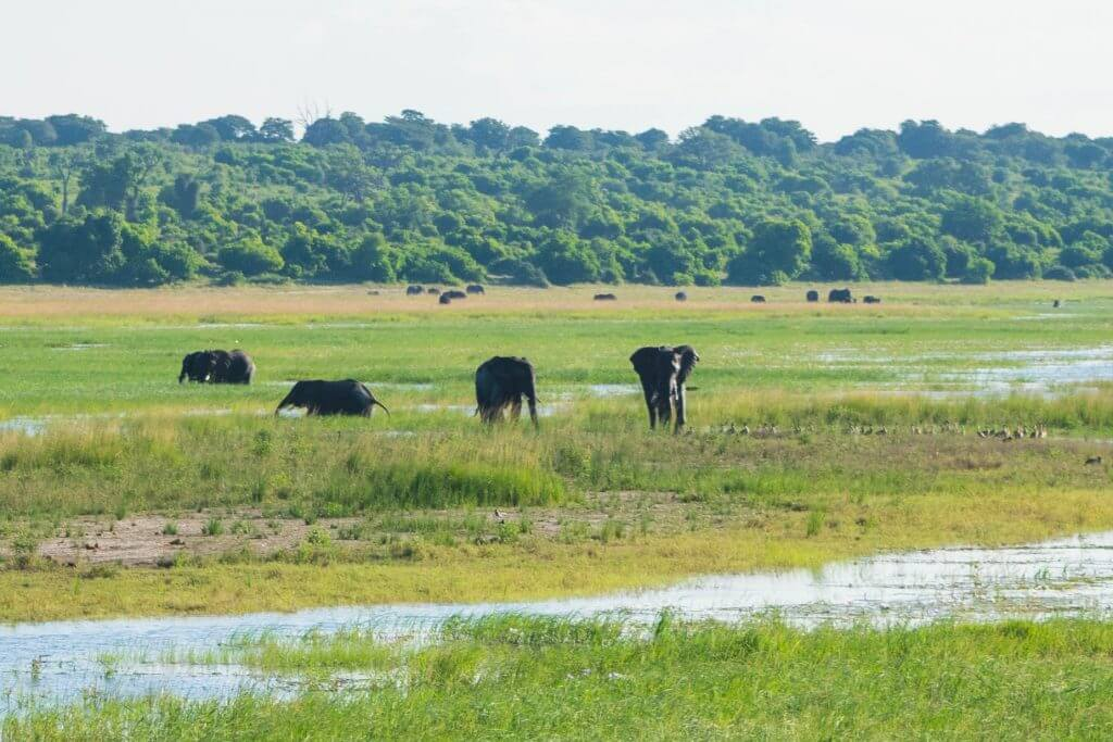 chobe national park botswana african adventure tour boat cruise wild elephants
