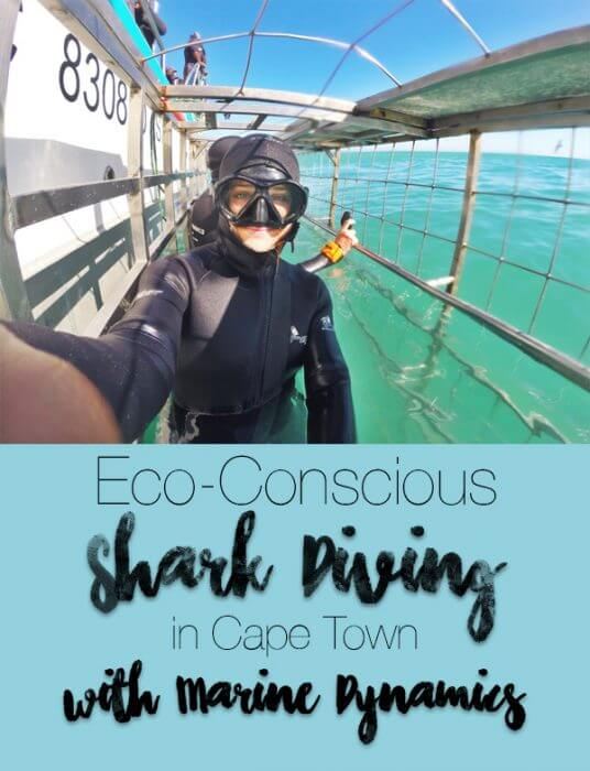 Find out about the company that promores research, conservation, and education through their shark cage dives and South African tours.