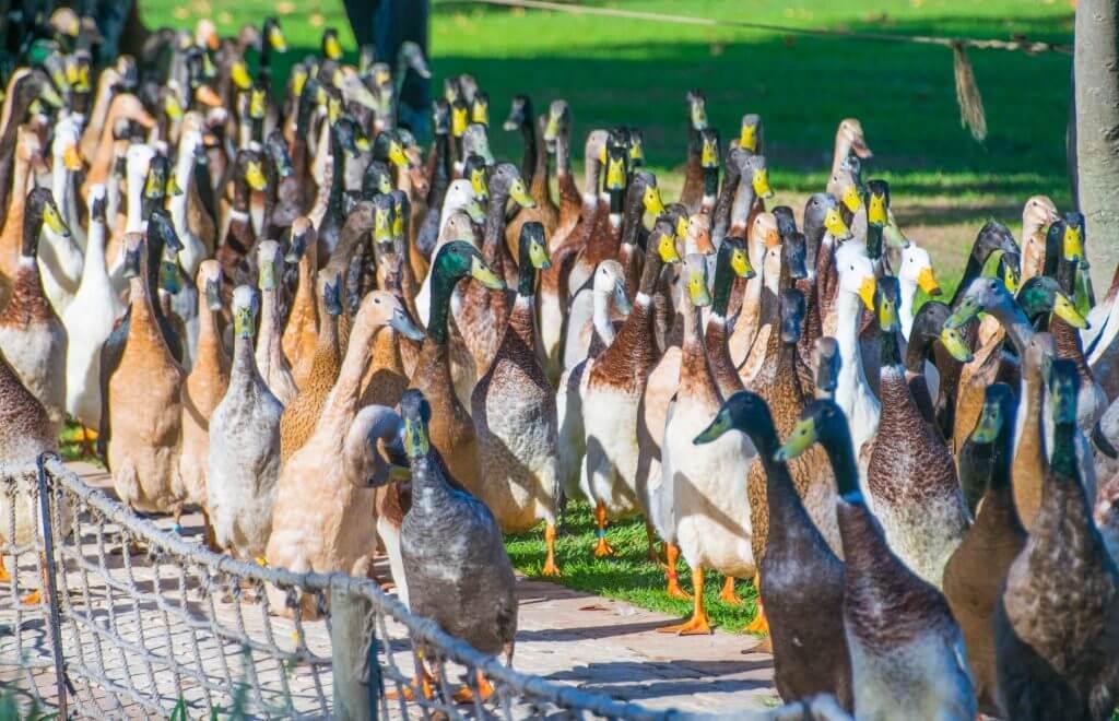 wine tasting in cape town vineyards stellenbosch duck parade
