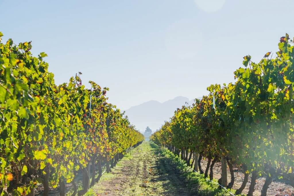 wine tasting in cape town vineyards stellenbosch