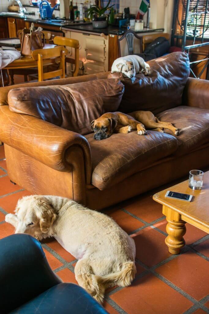 Wine Tasting in Cape Town Stellenbosch winery dogs