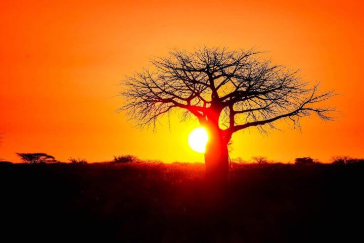 African sunsets ruaha national park tanzania