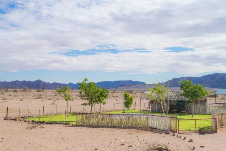 desert oasis namibia road trip