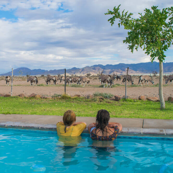 little sossus Namin desert Namibia road trip wath wild animals from a pool