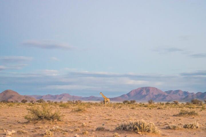 sossus desert african sunsets giraffe wildlife sunset