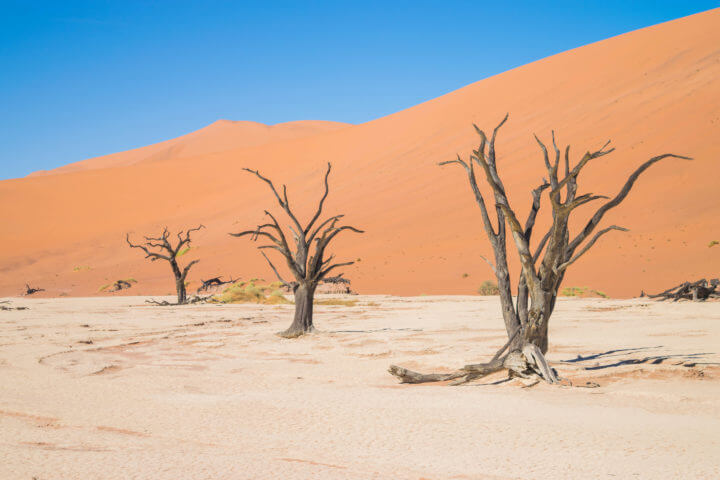 Namibia Road Trip itinerary deadvlei trees