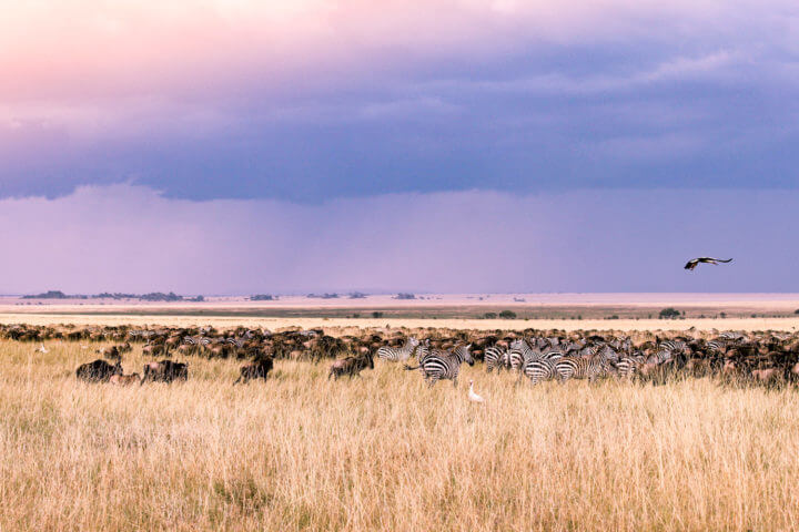 african sunsets serengeti tanzania
