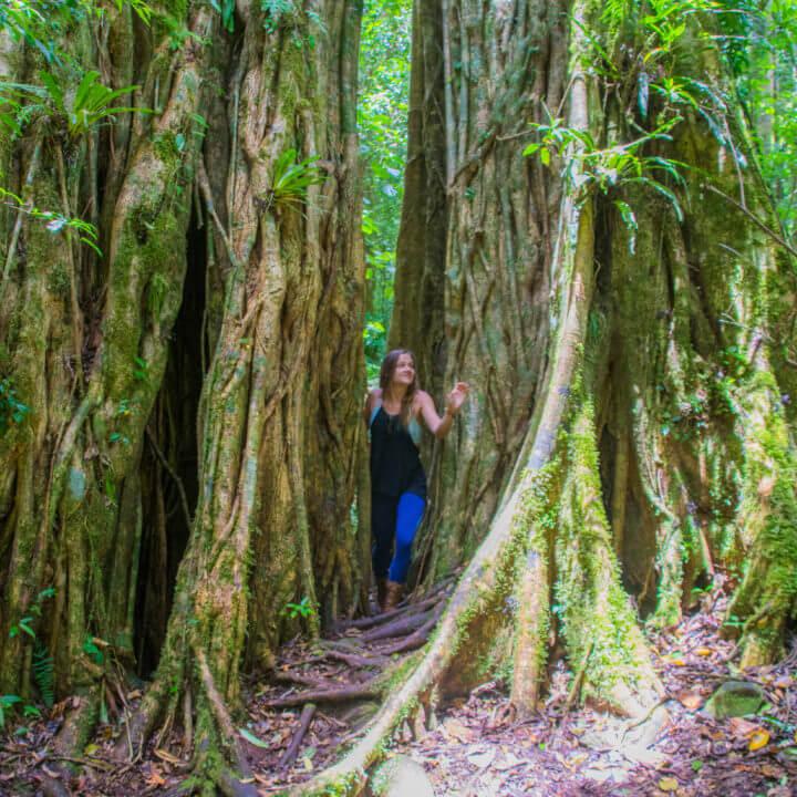lost and found hostel panama hiking adventure hostel in panama treasure hunt big tree