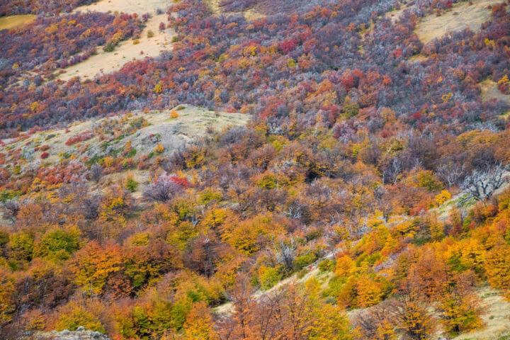patagonia in autumn fall colors argentina el chalten