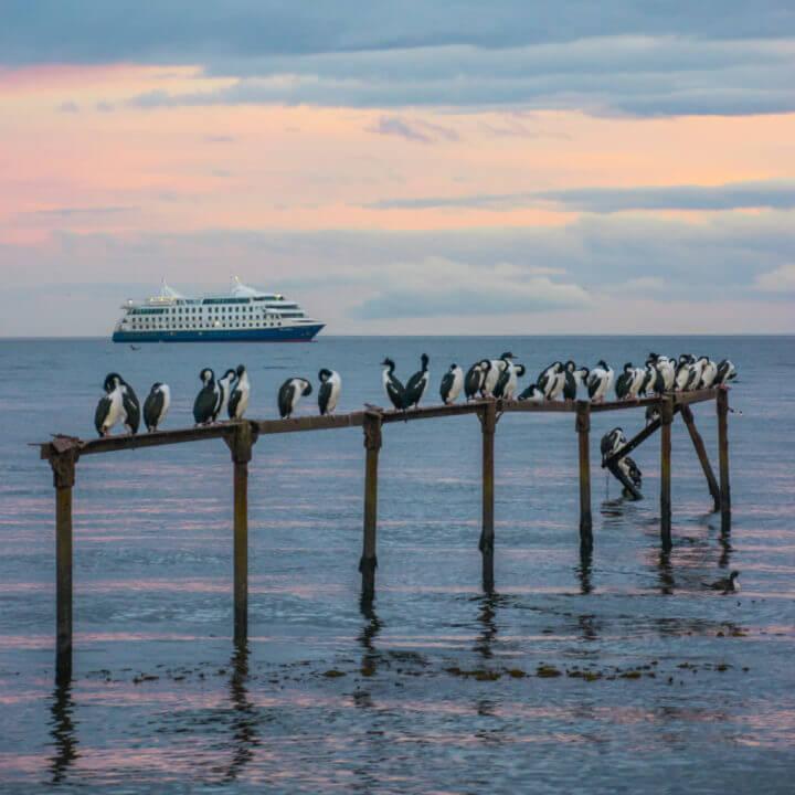 patagonia itinerary 2 weeks: punta arenas penguins tierra del fuego