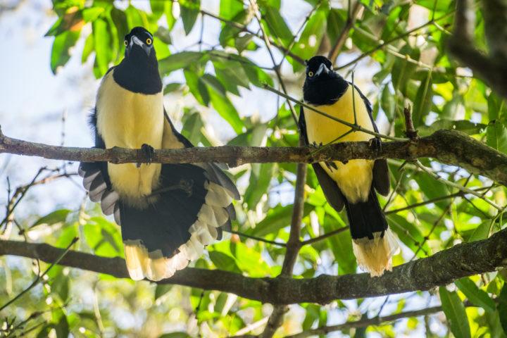 brazil parque das aves bird park iguacu falls