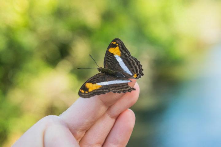 butterfly park biocentro puerto iguazu