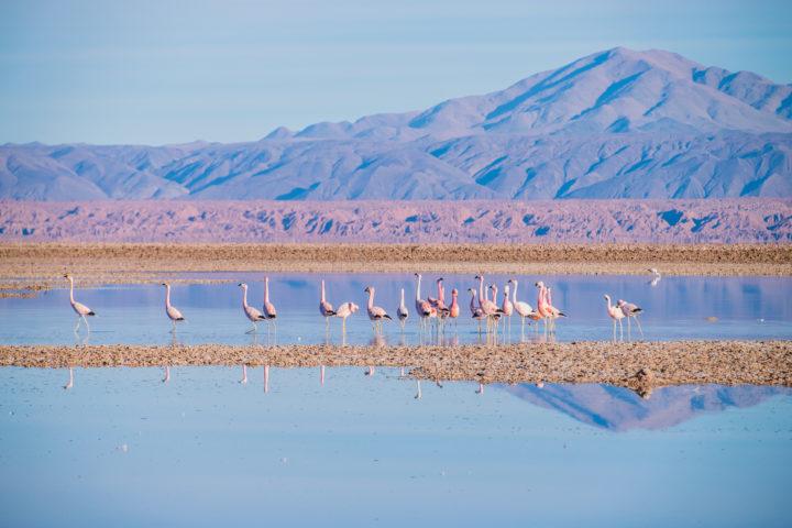 Guide to San Pedro De Atacama Chile – Tours, Food, & Things to Do