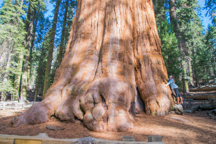 sequoia national park general sherman largest tree in the world